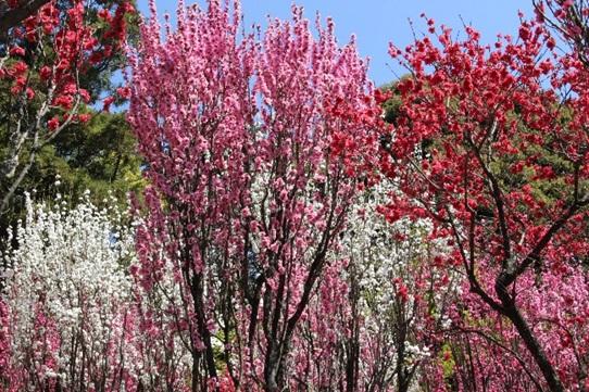 宮地嶽神社の春祭り画像1
