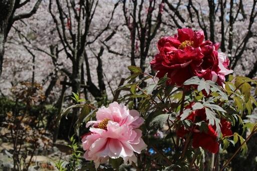 宮地嶽神社の春祭りの画像3