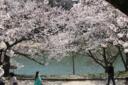 宮地嶽神社の春祭りの画像9