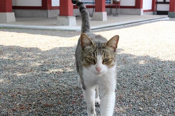 篠崎八幡宮の猫の画像