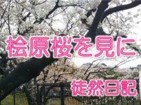 桧原桜のアイコン