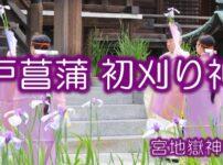 江戸菖蒲初刈り神事アイキャッチ
